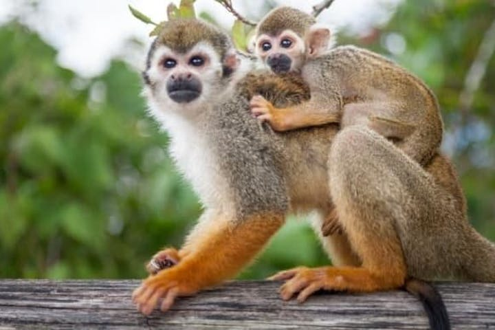 Monkeyland Dominican Republic