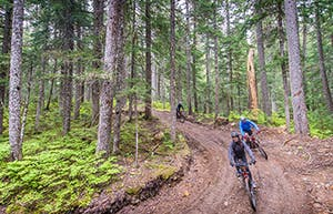 People mountain bike through the woods