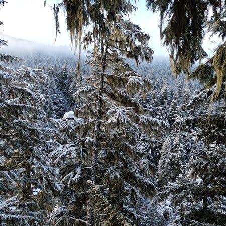 Ziptrek zipline whistler - winter view