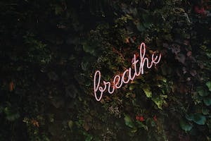 A wall of ivy, with an illuminated sign saying breathe in the middle