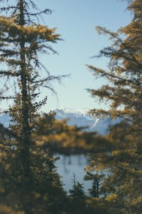 Peering through two trees looking at Whistler Mountain