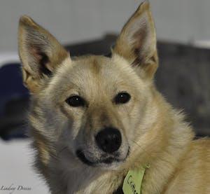 a dog looking at the camera