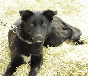 a dog lying on a pile of hay