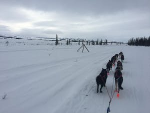 a group of people cross country skiing in the snow
