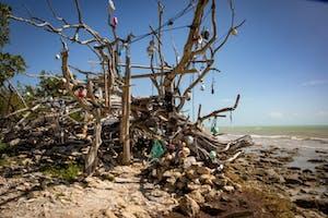a tree on a rocky beach