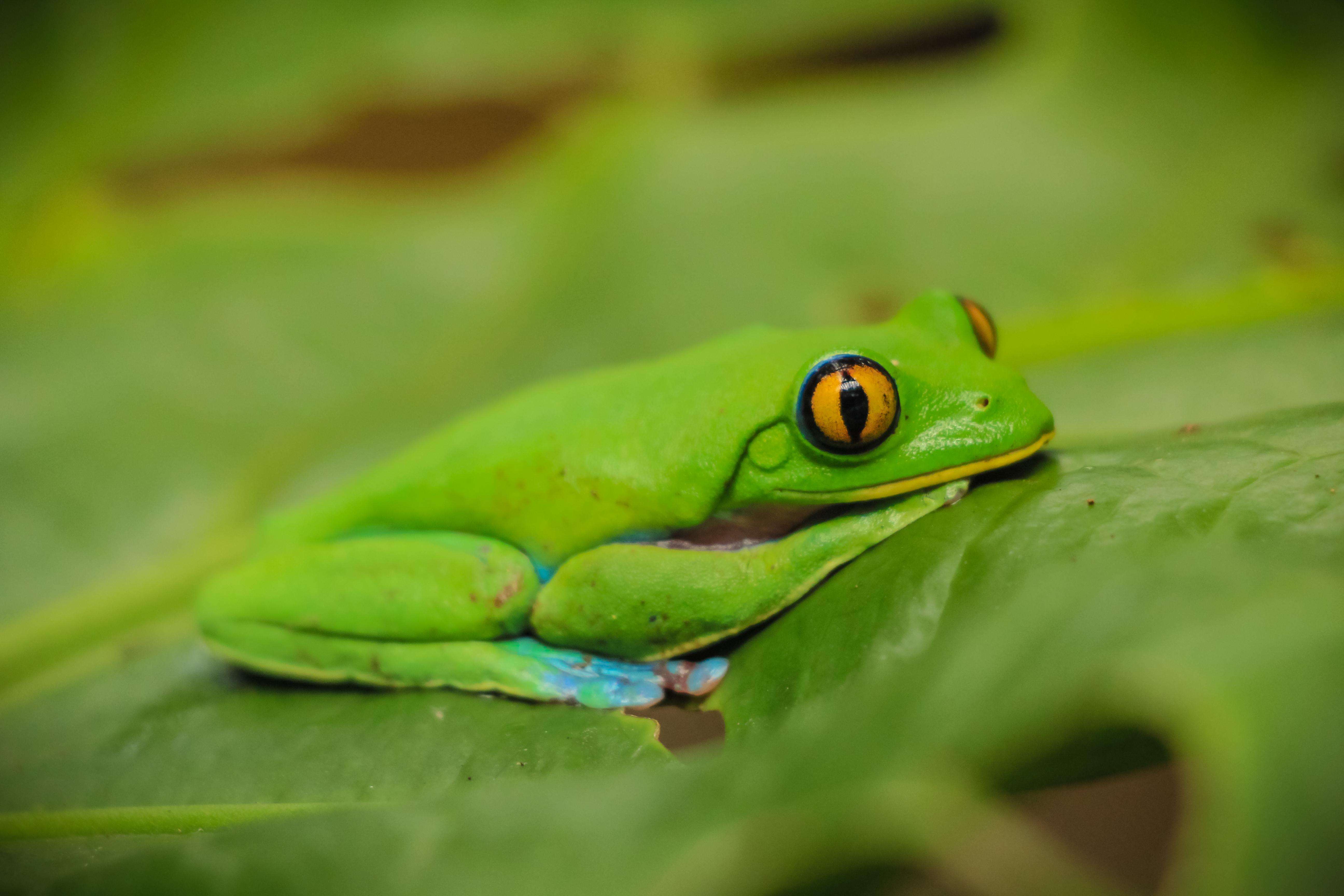 Frog Animal Sanctuary