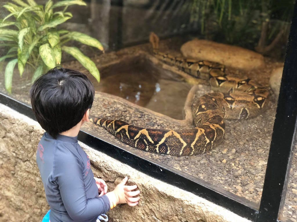 Diamante Animal Sanctuary - Boa Constrictor