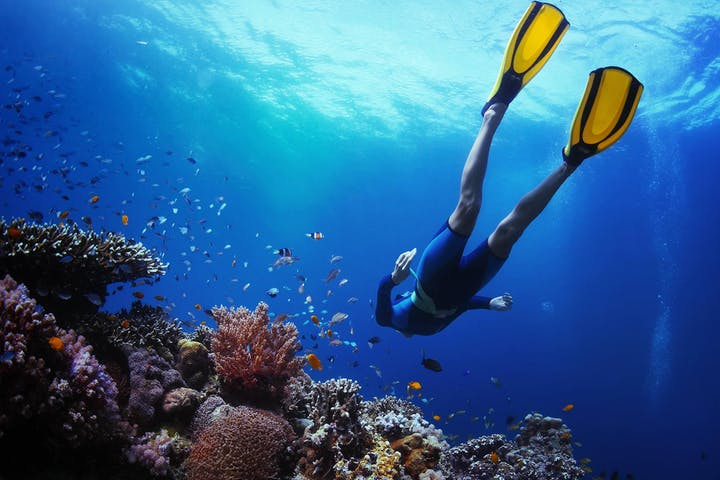 A snorkeler swimming through the coral reef