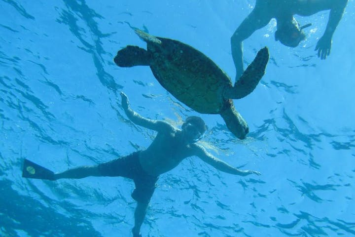 A guy swimming with a green turtle
