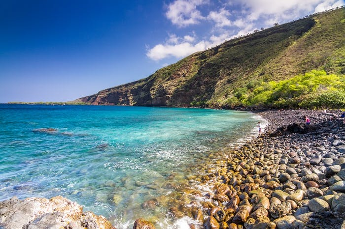 Groupon   Sea Quest Hawaii