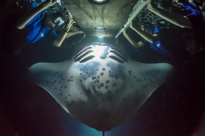 Night Manta Experience Sea Quest Hawaii