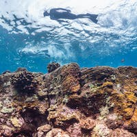 Sea Quest Hawaii | Unique Snorkeling Adventures in South Kona