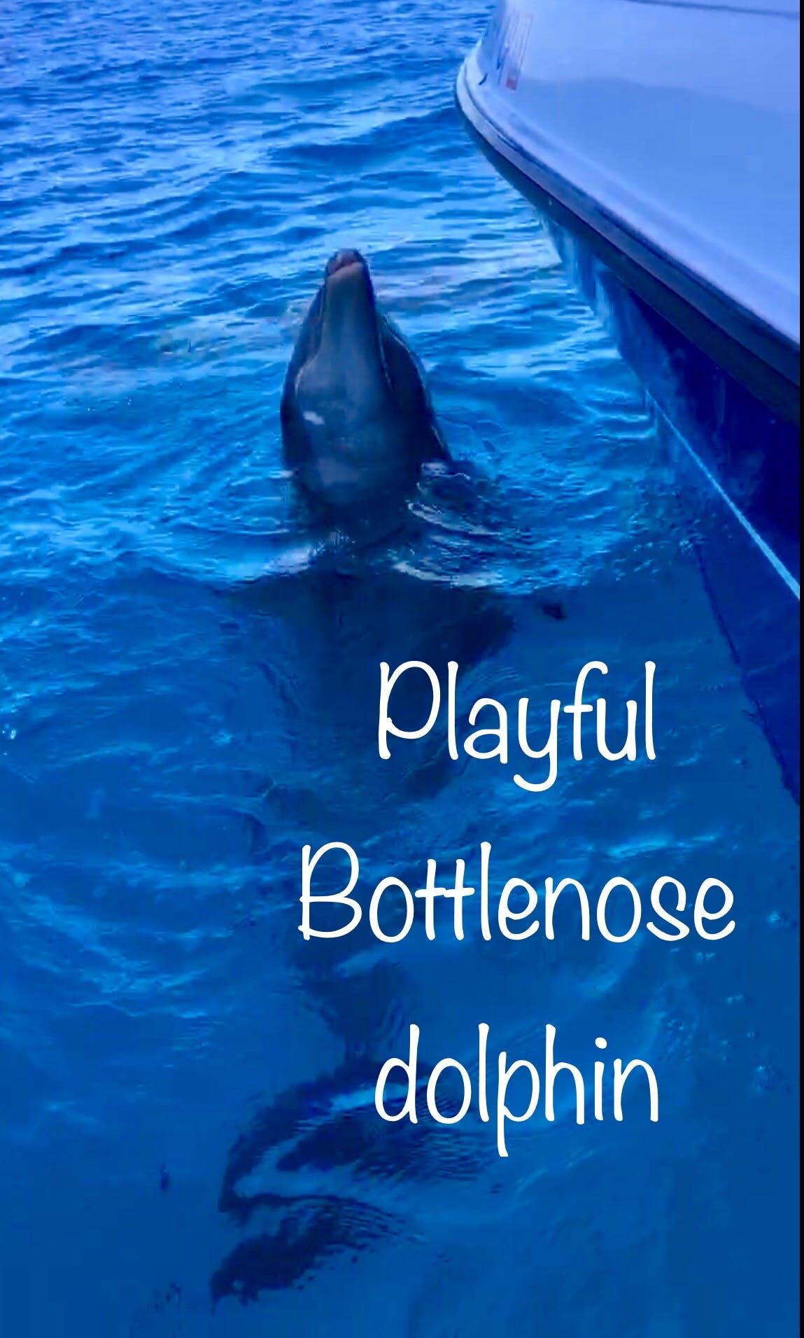 Playful Bottlenose Dolphin