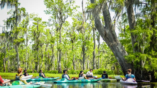 Swamp Kayaking Tours
