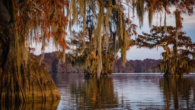 Cypress Swamp Trees