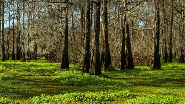 Swamp Landscape Photo Workshop Wild Louisiana Tours