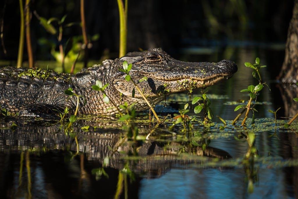 kayak kayak tour swamp swamp tour