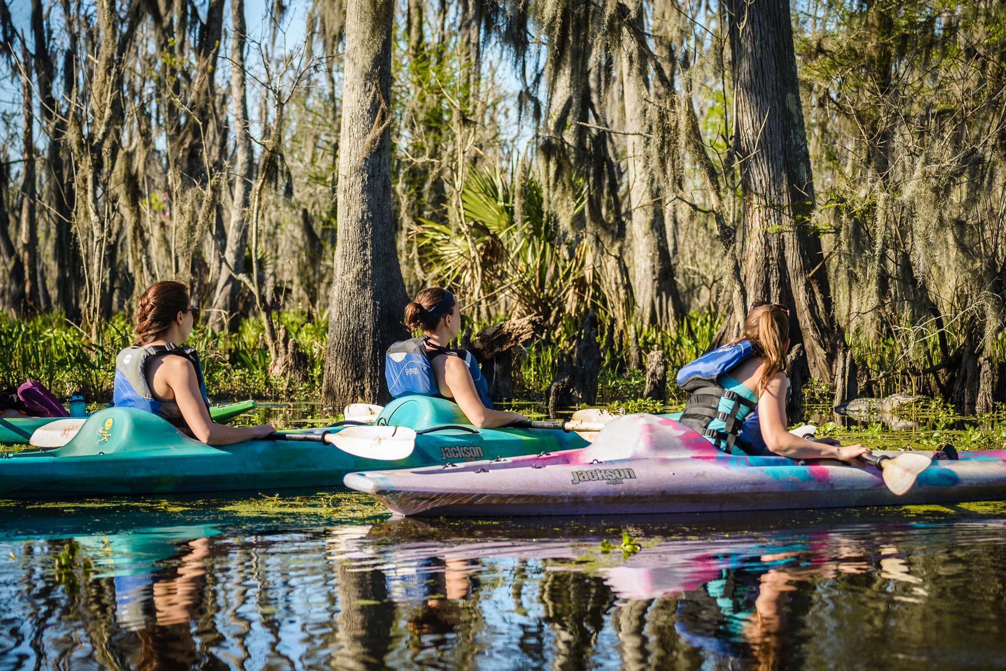 kayak alligator swamp swamp tour
