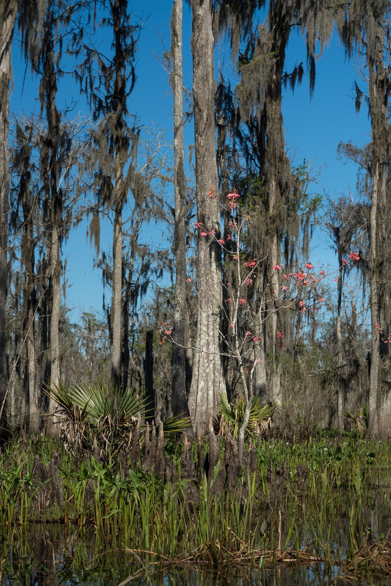 swamp swamp tour