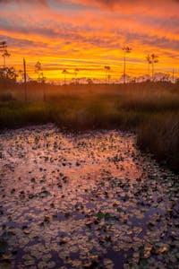 kayak, kayak tour, kayak swamp tour, new orleans, new orleans trips, things to do in new orleans,