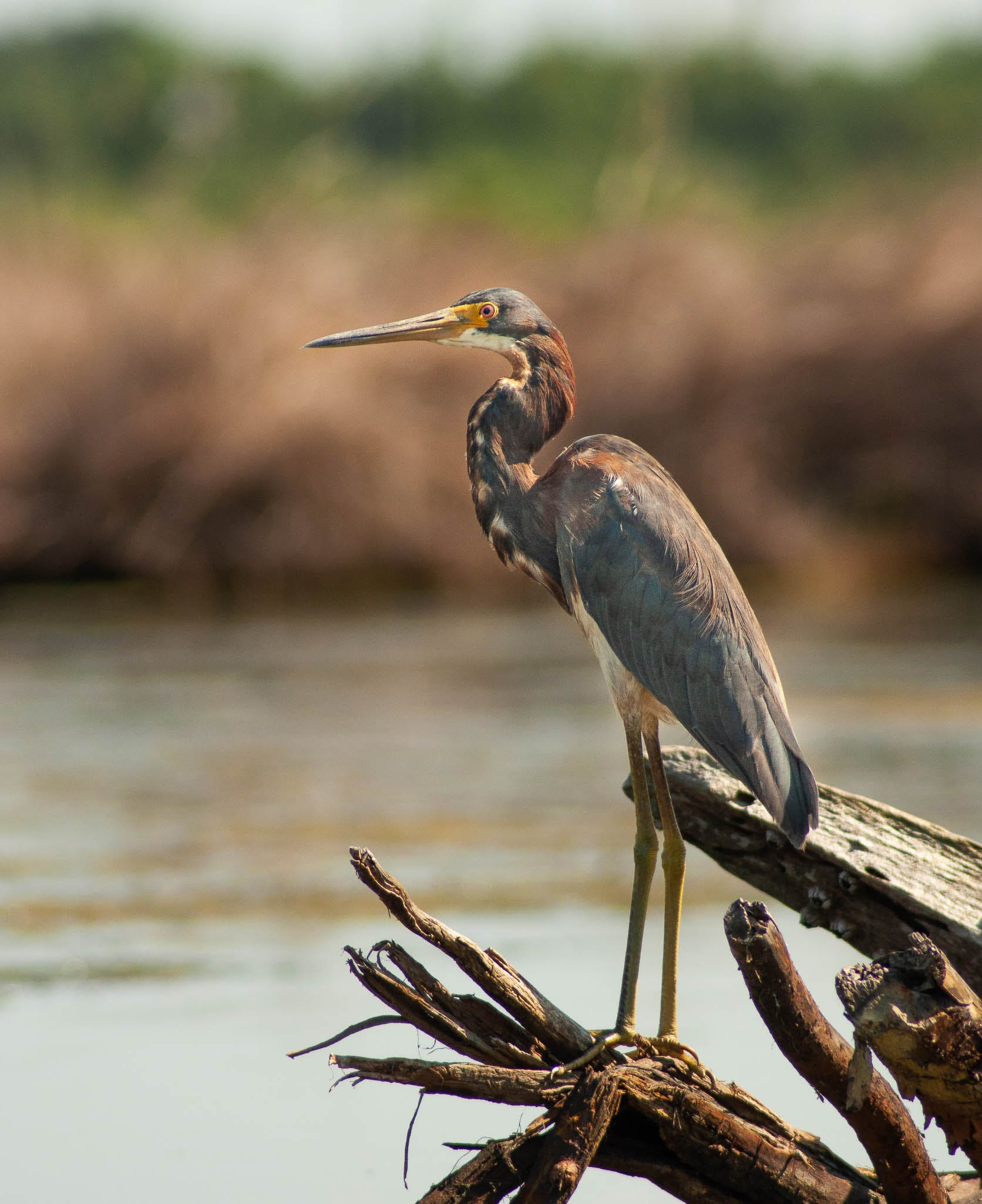birding louisiana, birding new orleans, birds new orleans, new , new orleans, kayak, kayak tours, kayak swamp tours, kayaking new orleans, new orleans kayak tours