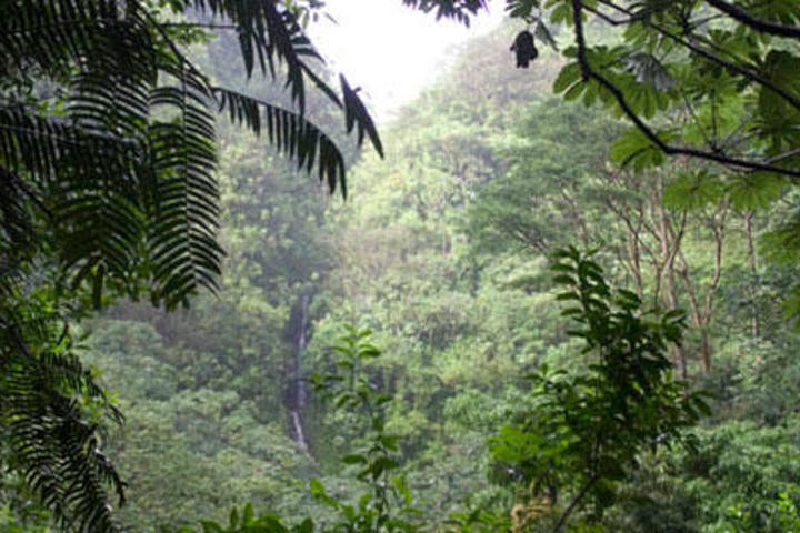 Rainforest, Waterfalls