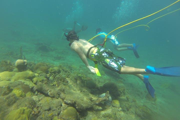 2 octopus divers