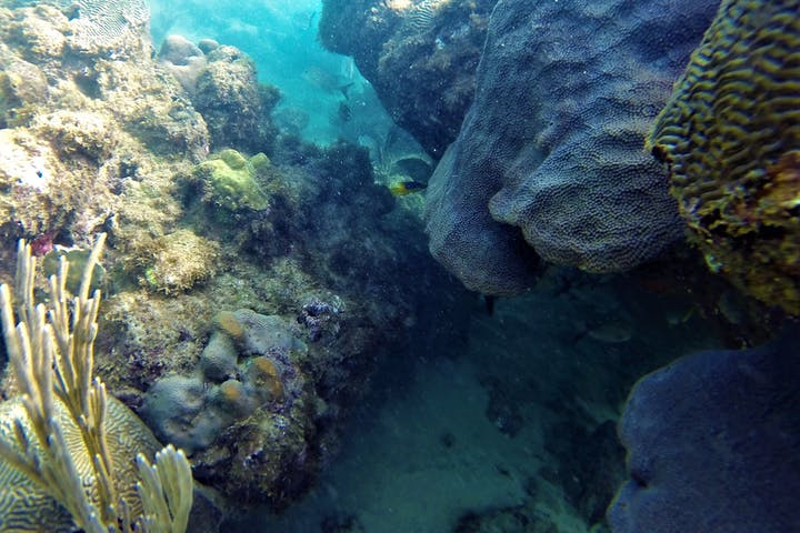rocks and corals
