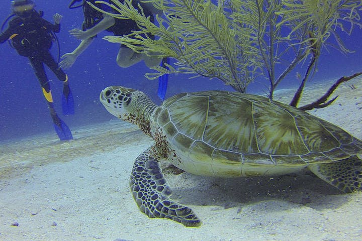 sea turtle on ocean bottom