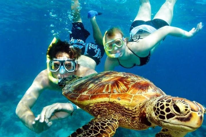 Couple snorkeling with a sea turtle