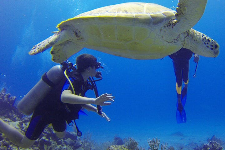 Divers swimming with a big sea turtle