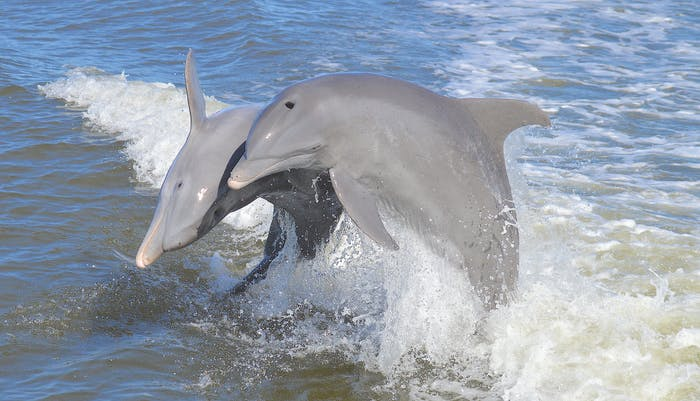 Dolphin Study Eco Tour Marco Island