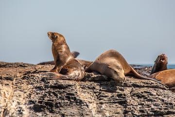 seals in loreto