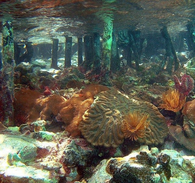 travel virgin Book coral monument island national reef