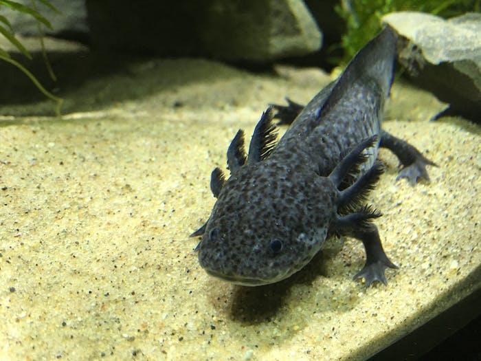 Fish & Invertebrates   Aquarium of Niagara