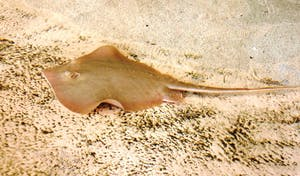 a fish lying on top of a sandy beach