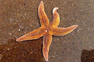 a starfish on a beach