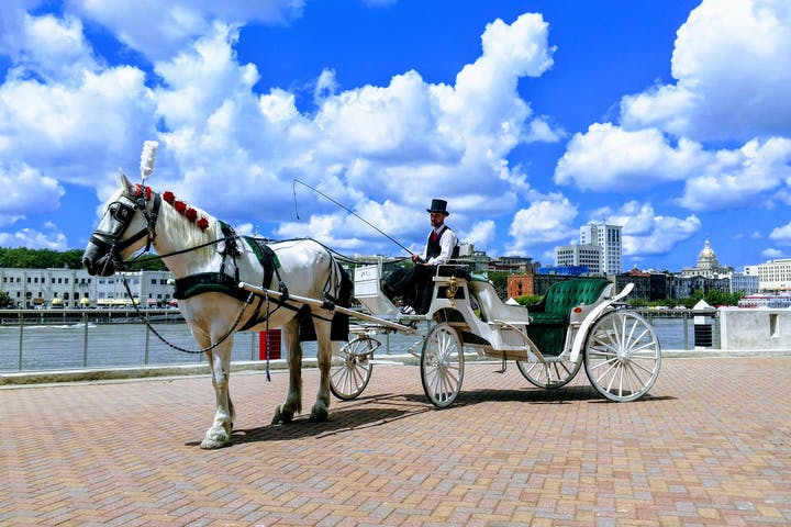 Man wearing a top hat on a white carriage with a white horse in front of a river in the city.