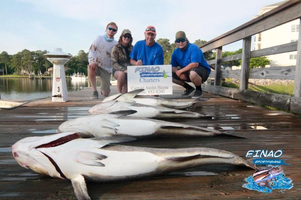 cobia-fishing-charter