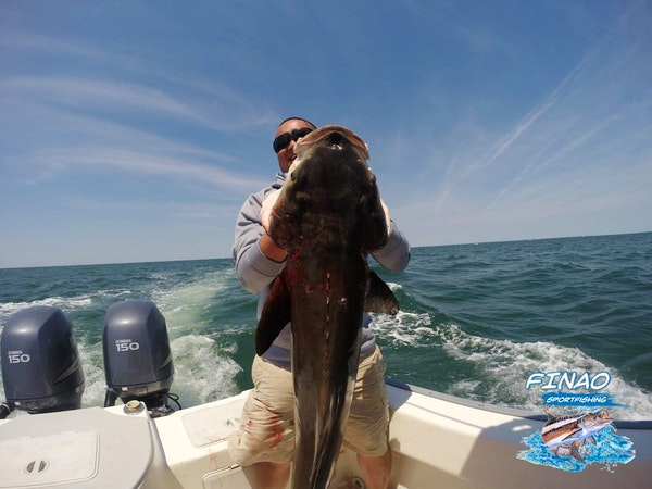 cobia charter