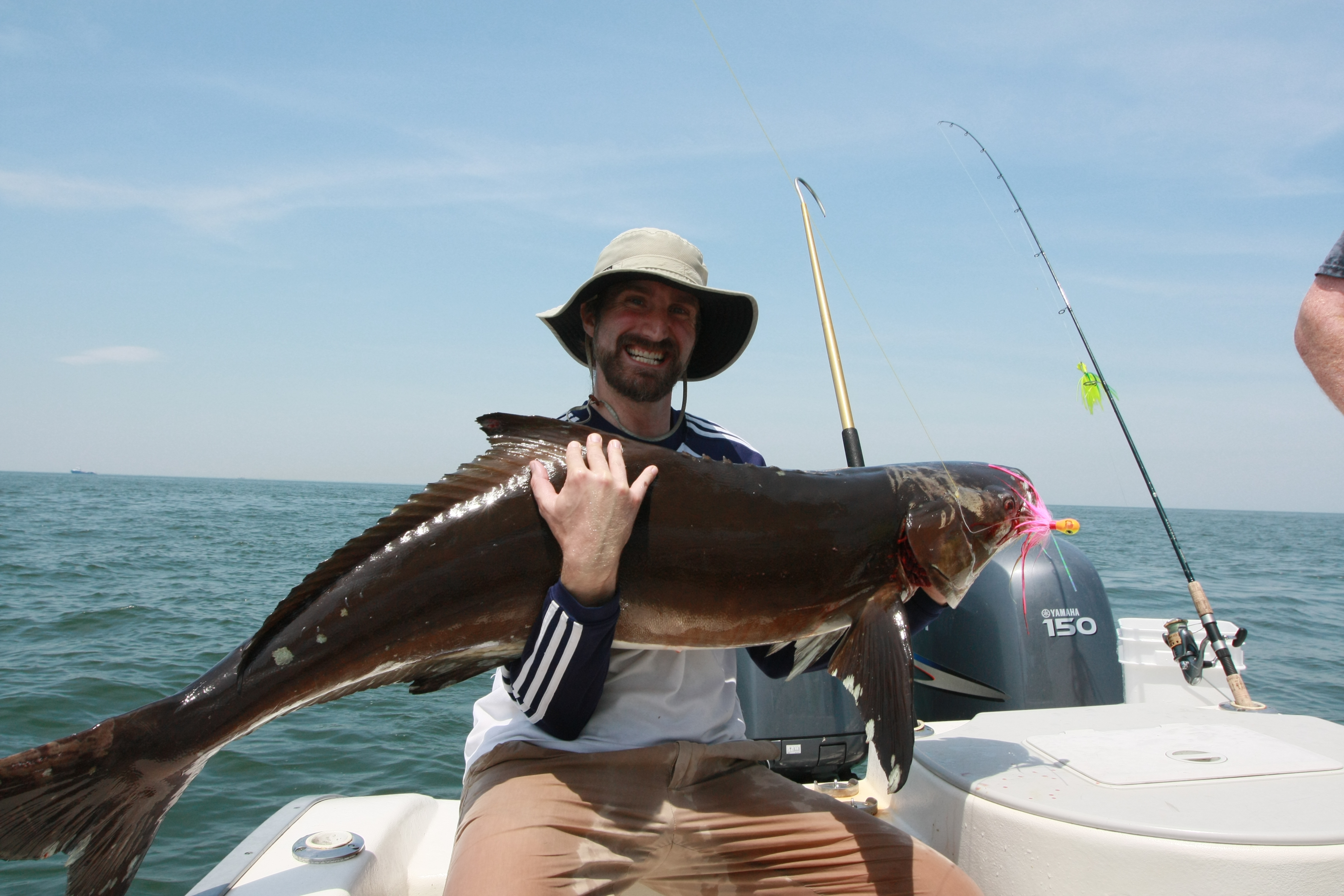 An Excited Fisherman Grasps A Huge Cobia On Fishing Trip