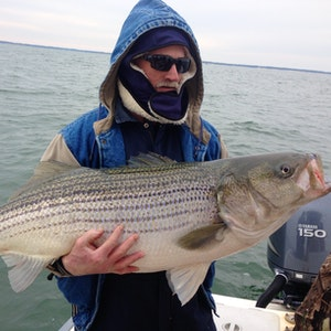 A man holds a huge striped bass on a cloudy day in the Chesapeake Bay