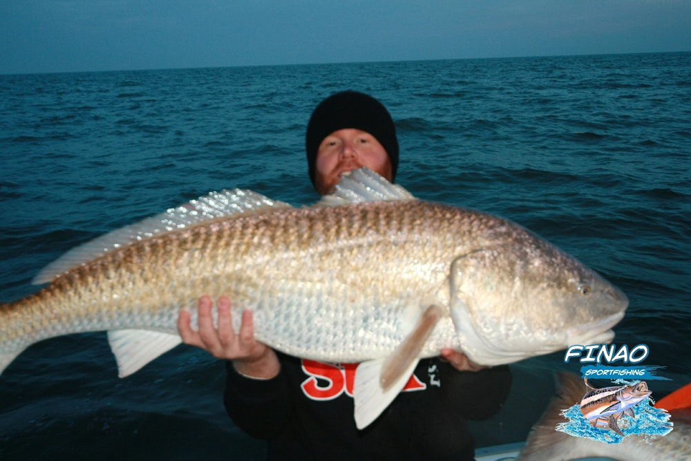 A fisherman holds up a huge red drum fish