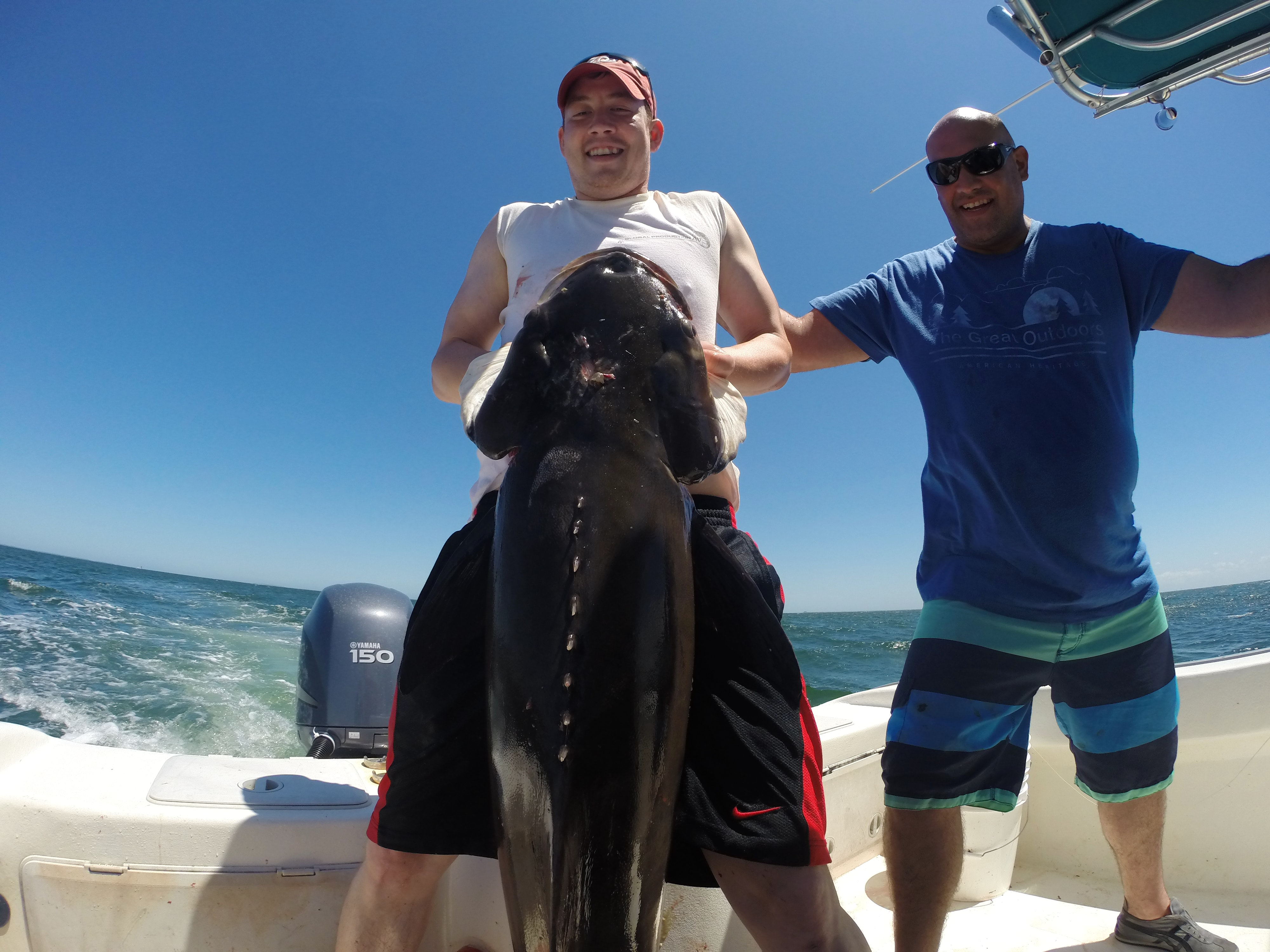 A Fisherman struggles to hold up a massive cobia