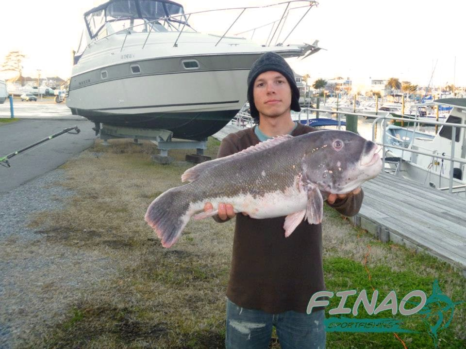 tautog fishing charter
