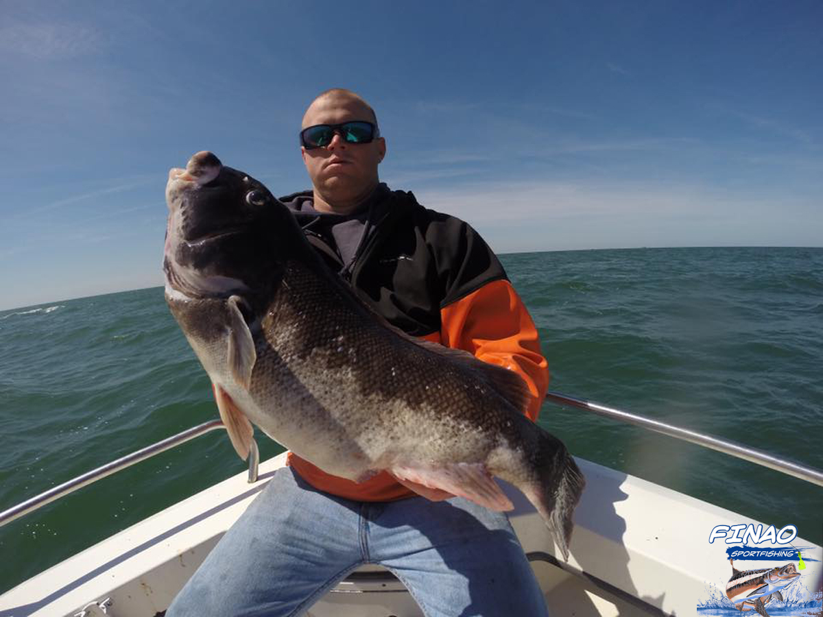 Tautog fishing finao sportfishing for Ny fishing regulations