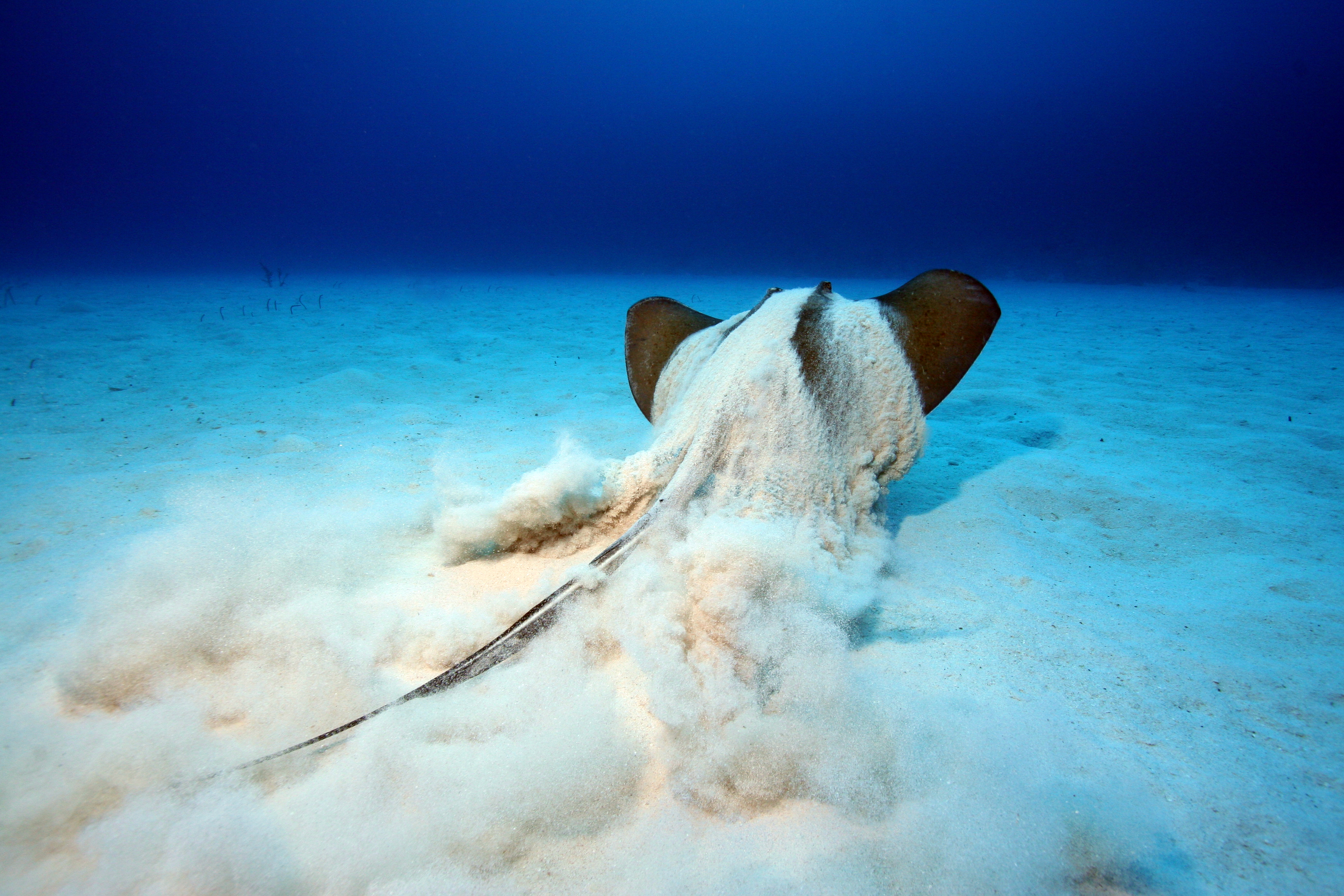 stingray-little-cayman-21