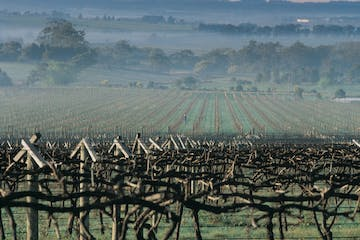 A field of vines at Visions of Victoria.