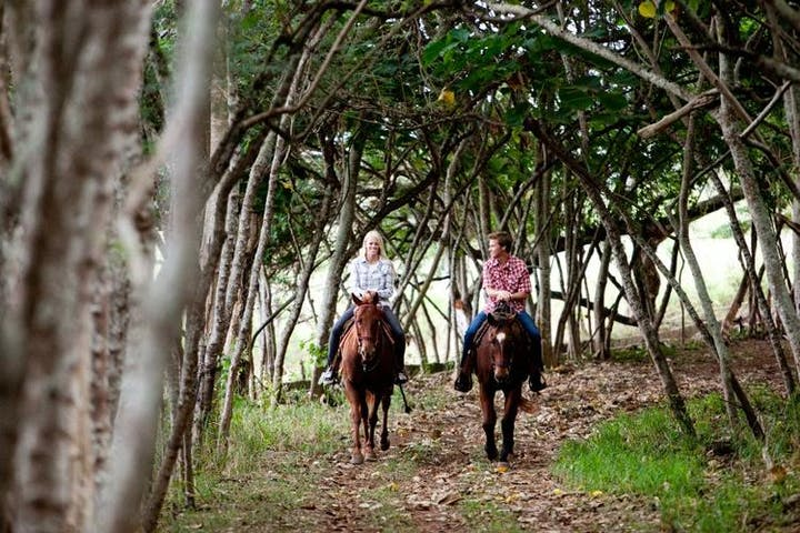 couple going down a trail with their horses