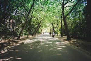 Amsterdam breaks for couples de Vondelpark